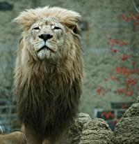 35 Beautiful Examples Of Animals Photography | Smashing Magazine