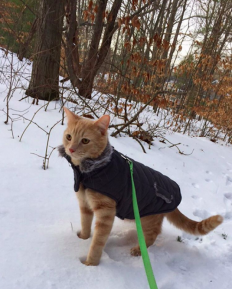 13 Signs Your Cat Likes Winter More Than You Do