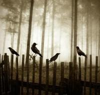 Oooo, portentous! / km-nature-Landscapes-Waterscapes-birds_large.jpg (JPEG Image, 550x524 pixels)