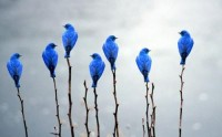 I've got the Blues / blue birds