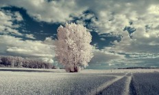 Infrared Photography by Ingo Schobert
