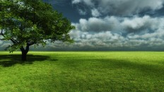 nature tree hd wallpaper desktop #9914 - Bliz Pix