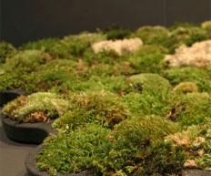 Moss Bathroom Mat