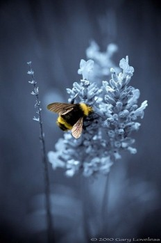 Dreamy bee. ?? | Bees | Pinterest