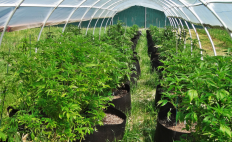 International Cannagraphic – Explore the World of Cannabis