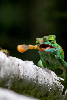 Super!Super!Green! - vurtual: Gotcha! (by Giovanni Mari)