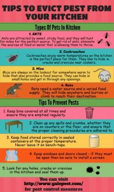 Pest Prevention Tips.
