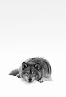 Wild spirit.