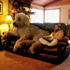Christopher Cline Goes On Imaginative Adventures With His 'Giant' Dog