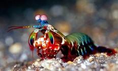 Mantis Karidesi Nedir? - 1 Milyar Bilgi