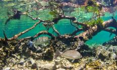 Ekosistem Nedir? - 1 Milyar Bilgi