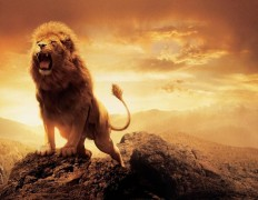 30 Best Lion Wallpapers – Creative GAG