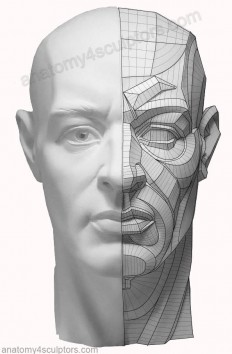 Anatomy Next - We are working now on topology of the face... | Facebook