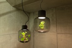 Terrarium Lamps by Nui Studio Light Your Space with Suspended Ecosystems | Colossal