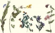 Herbaryum Nedir? - 1 Milyar Bilgi