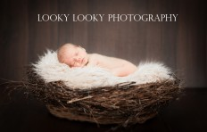 New Born 3 | New Born Photo Shoots Gallery