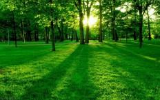 hd green wallpaper of nature | BeBeGi