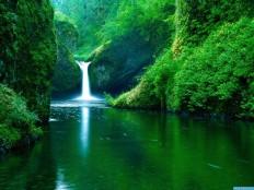green nature hd wallpaper #312 | BeBeGi | BeBeGi