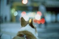 pitan's dream | Flickr - Photo Sharing!