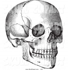 vector-clip-art-of-a-vintage-black-and-white-anatomical-sketch-of-a-human-skull-looking-right-by-bestvector-432.jpg (1024×1044)