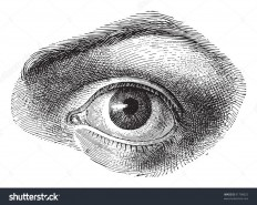 stock-vector-human-eye-vintage-illustration-illustration-from-meyers-konversations-lexikon-91798625.jpg (1500×1197)