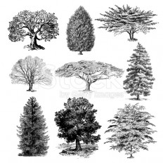 stock-illustration-21763777-forest-tree-illustrations-vintage-nature-clipart.jpg (556×556)