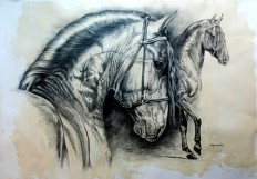 dibujo+de-caballo-en-carboncillo.jpg (719×500)