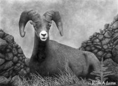 dibujo-de-animales-de-la-montaña-pintados-a-lapiz.jpg (1024×740)