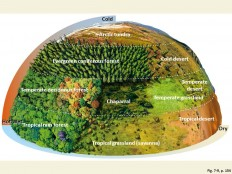 temperate forest vs grassland - Google Search