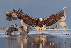 The Winners of the Audubon Photography Contest 2016