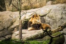 Beautiful Animals Photography by Jordan Lacsina