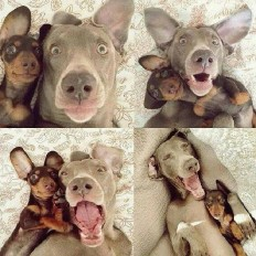Dog Lovers Club