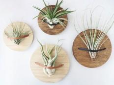 Wooden wall hanger – www.phytplants.com