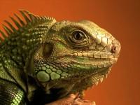 Lizard_and_Varan_010.jpg (1024×768)