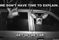 deer-car.jpg (720×493)