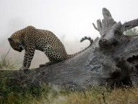 Best Wallpapers of 2011, Pictures, Photo Gallery - National Geographic