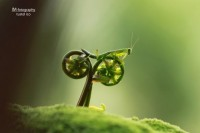 Mantis on a Bicycle By Tustel Ico