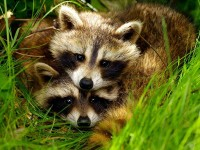 Animal Pair Pictures - Animal Wallpapers - National Geographic