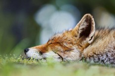 Gorgeous Animal Portraits by Pim Leijen