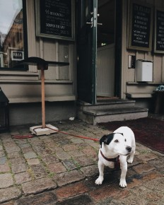 This Instagram Documents Dogs Waiting Outside For Their Owners