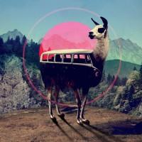 Llama Art Print by Ali GULEC | Society6