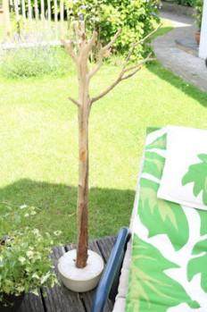 Meine grüne Wiese