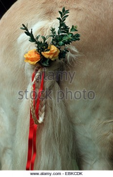 domestic-horse-equus-przewalskii-f-caballus-decorated-tail-germany-ebkcdk.jpg (347×540)
