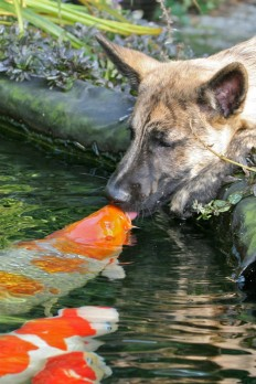 Packlight-Travelfar - packlight-travelfar: (via 500px / Kissing a koi...