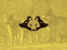 3 Wolves by Daniel Bodea