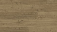 Regal Oak | Godfrey Hirst Floors