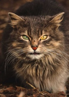 Gabriel Khiterer Captures Majestic Portraits of Stray Cats