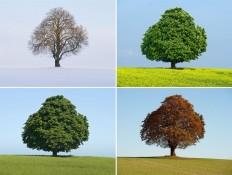 pb-111005-tree-da.photoblog900.jpg 900×677 pixels