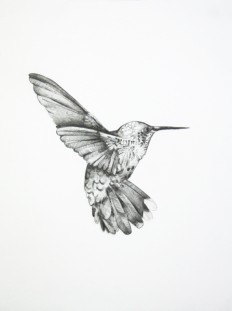 Bird Drawing by Shayle Flesser on Inspirationde