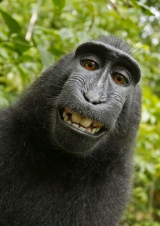 Black macaque takes self-portrait: Monkey borrows photographer's camera | Mail Online